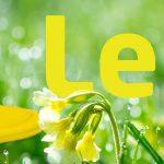 blog lente